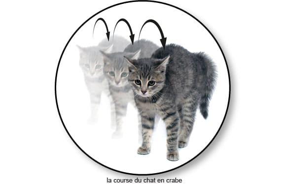 chat-court-courir-fait-le-crabe-peur