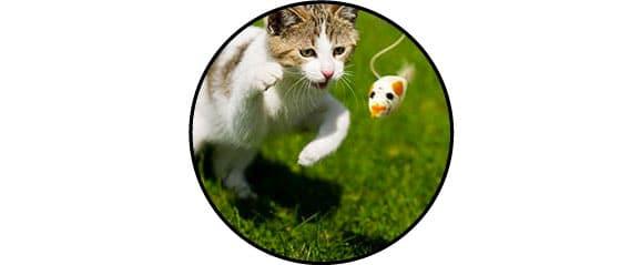 Jouet canne à pêche oiseau avec plumes pour le chat