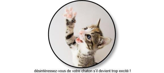 chaton-jeu-excite-mord-mordille-main