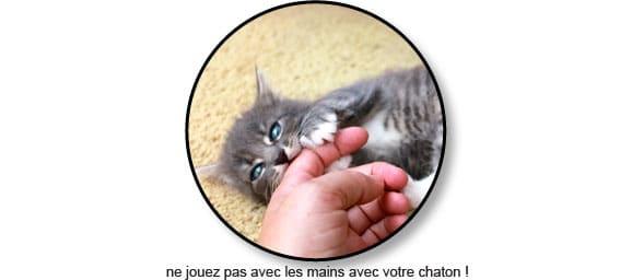 chaton-mord-mordille-mordre-main