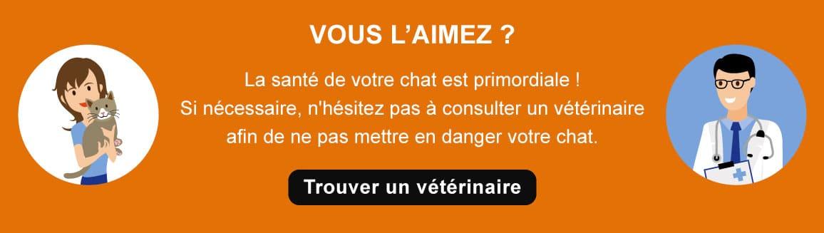 Conseil vétérinaire pour le chat