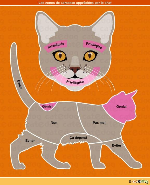 zone-caresse-caresser-mordre-mordille-chat
