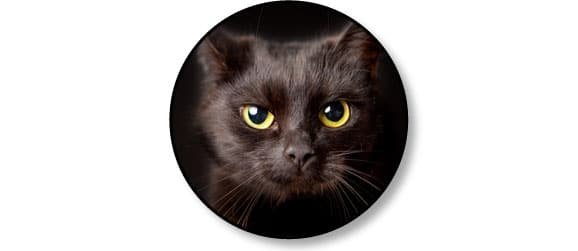 adopter-adoption-chat-chaton