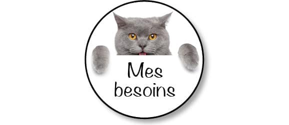 adopter-adoption-chaton-chat-besoins