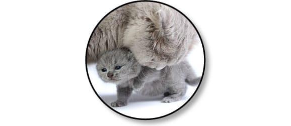 chaton-mere-chatte-mignon-adaptation-comportement