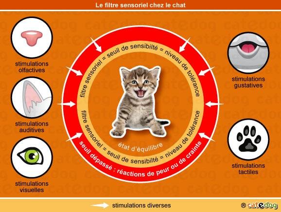 filtre-sensoriel-adoption-comportement-chaton