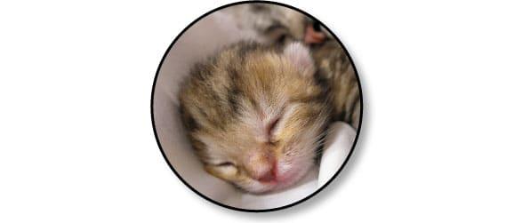 naissance-chaton-mignon-comportement-adaptation