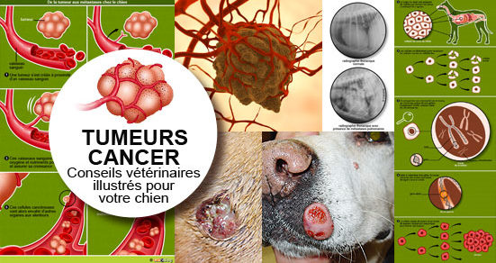 tumeur cancer m tastase chez le chien conseils v t rinaires illustr s catedog. Black Bedroom Furniture Sets. Home Design Ideas