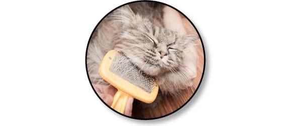 boule-de-poil-brosser-brossage-chat