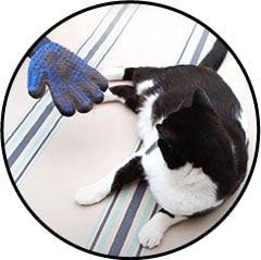 Gant de toilettage et de brossage pour le chat et le chien