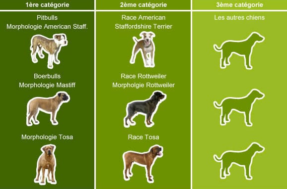 assurance-chien-dangereux-categorie-1-2