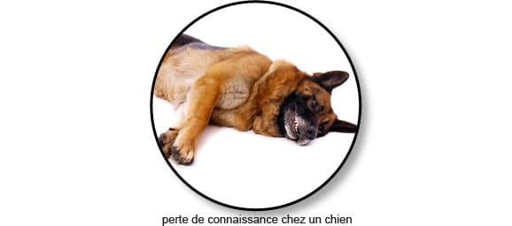 massage-cardiaque-arret-cardio-respiratoire-chien