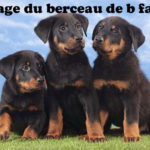 chiot-berger-de-beauce-beauceron-ciel