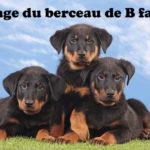 chiot-berger-de-beauce-beauceron-pelouse