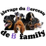 eleveur-elevage-berceau-b-family-beauceron-bouvier-basset-hound
