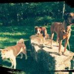 promenade-pension-chien-1