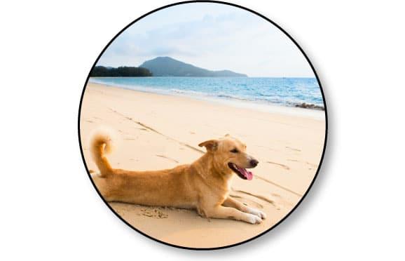 conseil-partir-vacances-chien-mer-plage