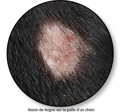 Teigne sur la peau d'un chien