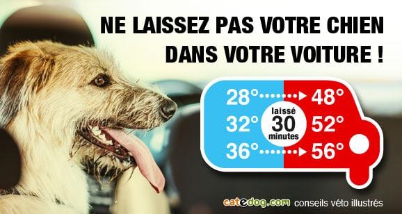 canicule-chaleur-temperature-chaud-voiture-chien
