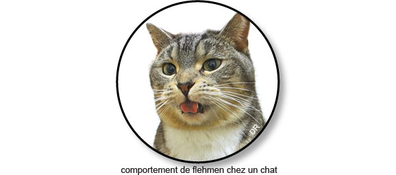 comportement-flehmen-chat-pipi-urine-pisse