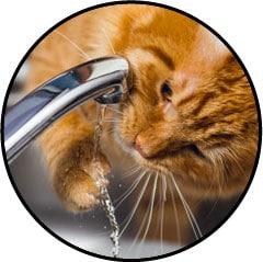 Alimentation du chat qui joue avec l'eau