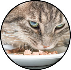 Alimentation humide et pâtée pour chat