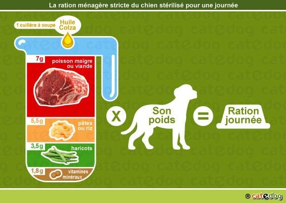 alimentation-ration-menagere-chien-castre-sterilise