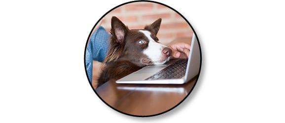 Livraison à domicile de repas frais fait maison Dogchef pour chien