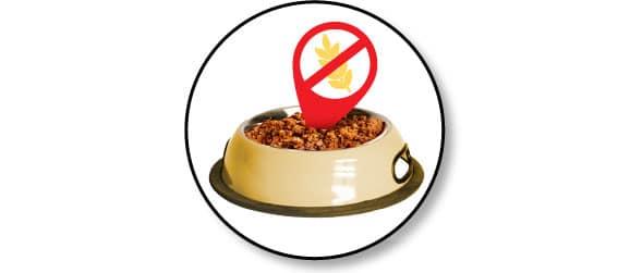nourrir-alimentation-chien-mange-cereales