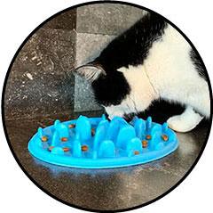 Plateau gamelle anti-glouton pour chat