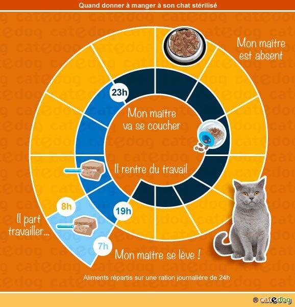 quoi-quand-donner-manger-chat-castre-sterilise