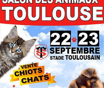 Salon du chiot et du chaton de toulouse 2018 conseil - Salon du chiot et du chaton ...