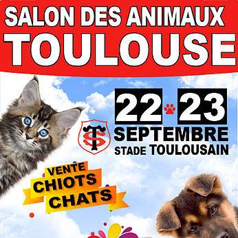 Salon du chiot et du chaton de toulouse 2018 conseils v to illustr s catedog - Salon des animaux toulouse ...