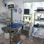 clinique-veterinaire-alpha-cannes-soins
