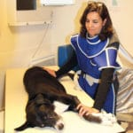 clinique-veterinaire-mairie-le-chesnay-radiologie