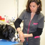 clinique-veterinaire-mairie-le-chesnay-soins