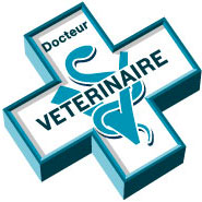 question-conseil-veterinaire-gratuit-chien-chat