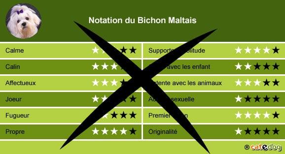 Acheter ou adopter un chien bichon maltais