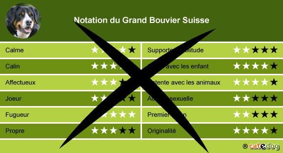 acheter-adopter-prix-chien-grand-bouvier-suisse