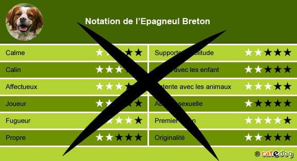 Acheter un Epagneul Breton pour adopter