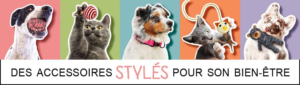 Boutique en ligne d'accessoires pour chien, chiot et chat