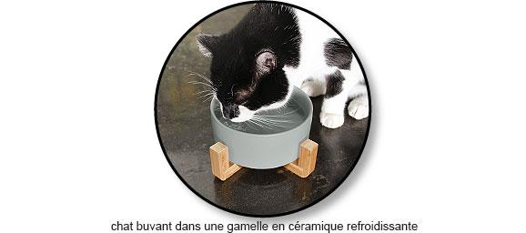 Chat buvant dans une gamelle en céramique refroidissante