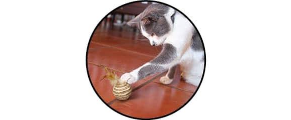 Chat joue avec une balle avec plumes en appartement