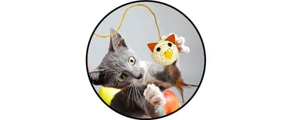 Chat jouant avec une balle à plumes au bout d'une canne à pêche