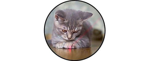 Jouet stylo pointeur laser pour chat