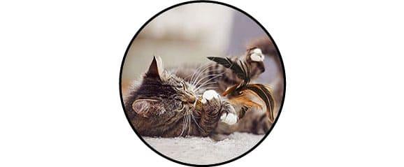 Jouet cataire catnip herbe à chat