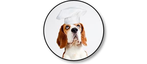 Livraison de plats ou repas cuisinés à domicile Dog Chef pour chien