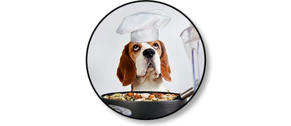 Repas frais pour le chien et code promo Dog Chef
