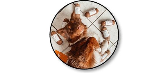 Livraison à domicile de repas frais fait maison Elmut pour chien