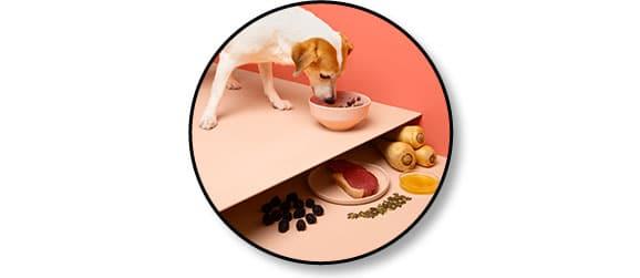 Avis vétérinaire et code promo pour Franklin Pet Food
